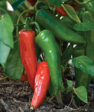 Pepper Seeds Anaheim Chili (Heirloom)