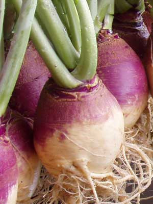 Rutabaga Seeds American Purple Top (Heirloom)