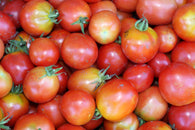 Tomato Seeds Siberian (Heirloom)
