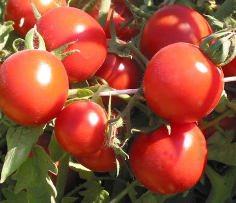 Tomato Seeds  Cherry  Sugar Lump (Heirloom)