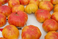 5 Great Heirloom Tomato Varieties: Great Flavors and Colors