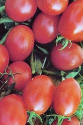 Tomato Seeds Cherry Crovarese Grape (Heirloom)