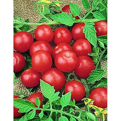 Tomato Seeds Small Red Cherry (Heirloom)