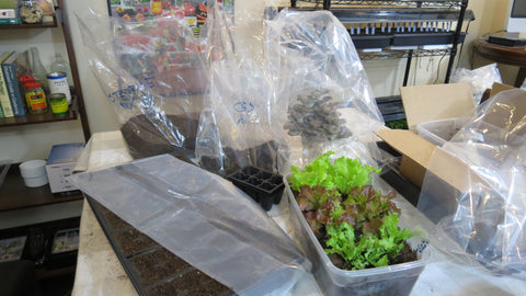 Seed Mix, Sterilizing or Humidity Bags: 10 - 2 mil. 10x8x24 Gusseted Poly Bags