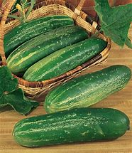 Cucumber Seeds Straight 8 (Heirloom)