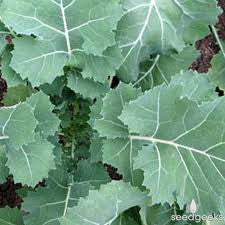 Kale Seeds Premier (Heirloom)