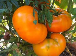 Tomato Seeds Brandywine Yellow (Heirloom)