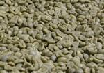 Daterra - Espresso Yellow