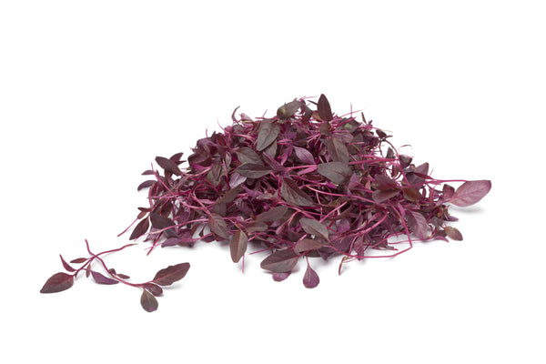 Amaranth Red Garnet Organic Sprouting Seeds