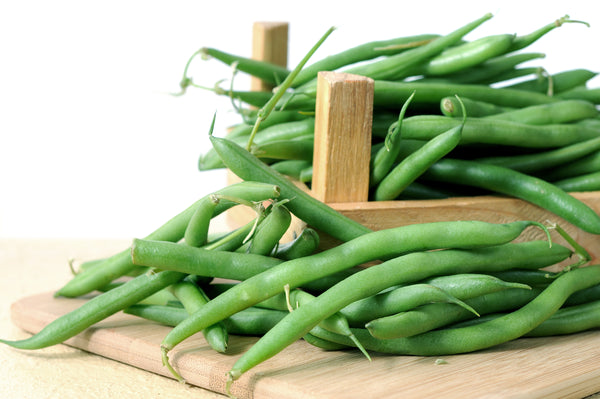 Harvester Bush - Bean Seeds