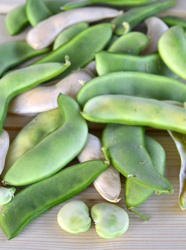 Henderson Bush, Lima Bean Seeds