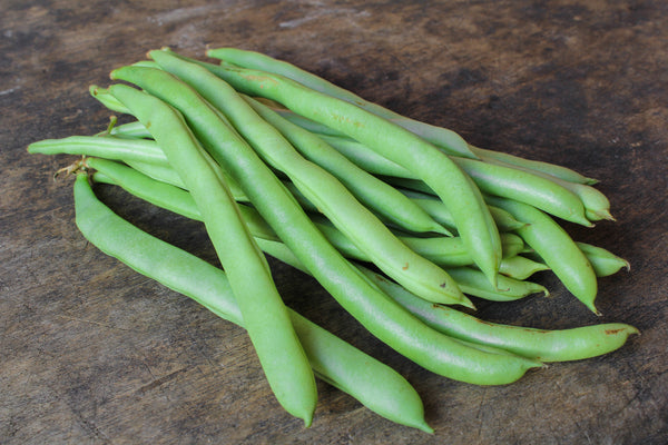 Stringless Kentucky Blue Pole - Bean Seeds