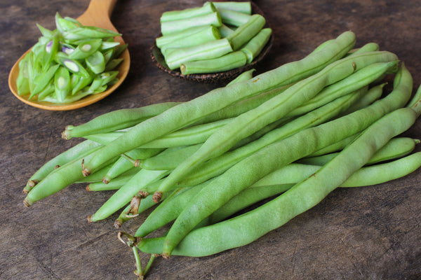 Kentucky Wonder Brown Pole Bean Seeds