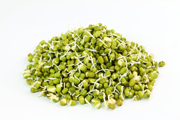 Mung Bean Organic Sprouting Seeds