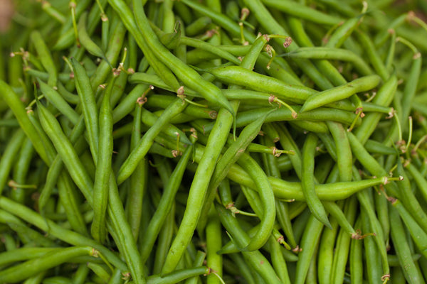 Stringless Green Pod (Burpee) - Bean Seeds