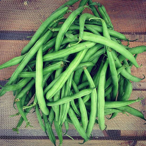 Top Crop Bean Seeds