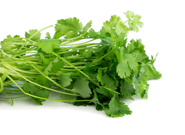 Cilantro, Slow Bolt