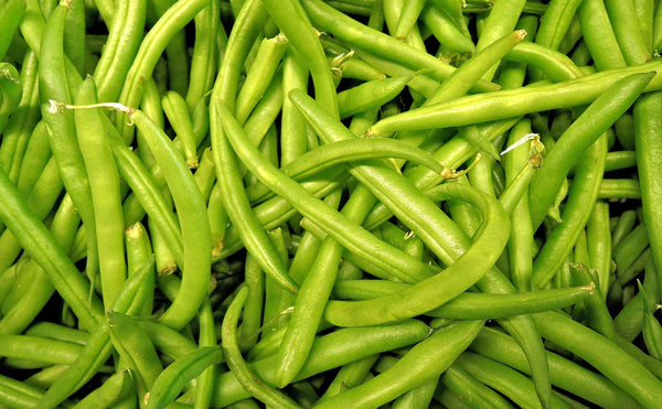 Contender Bush Bean Seeds - Heirloom