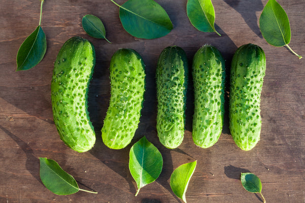 Boston Pickling Cucumber Seeds