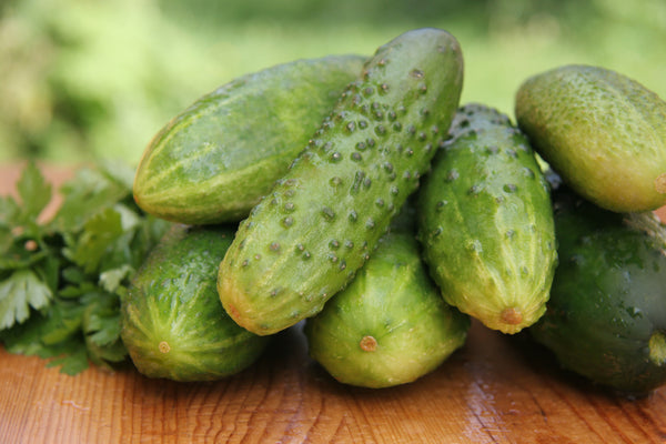 Salad Bush Hybrid Cucumber Seeds