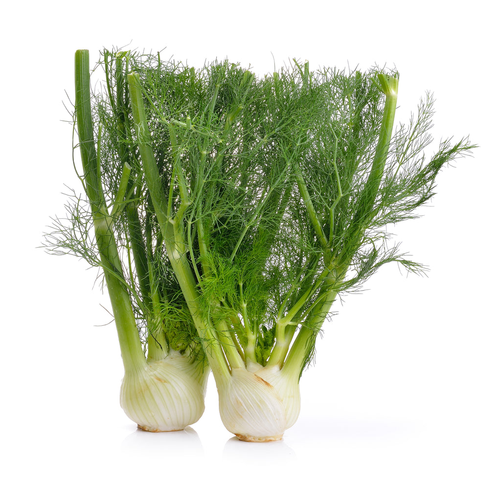 Fennel, Florence