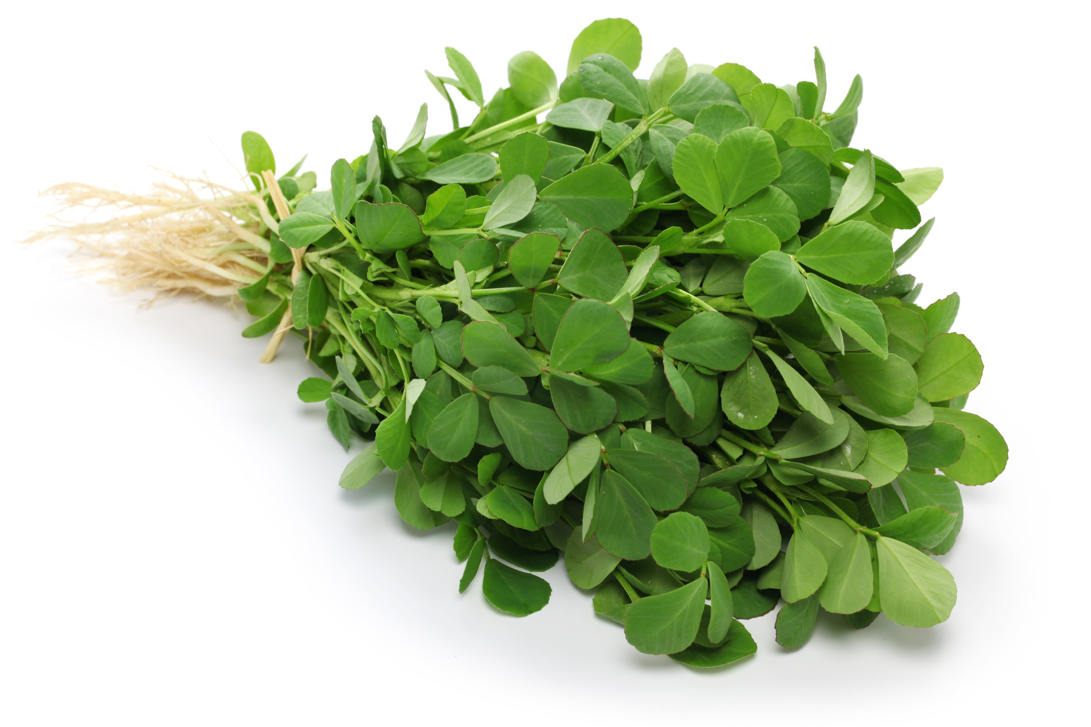 Fenugreek – Hometown Seeds