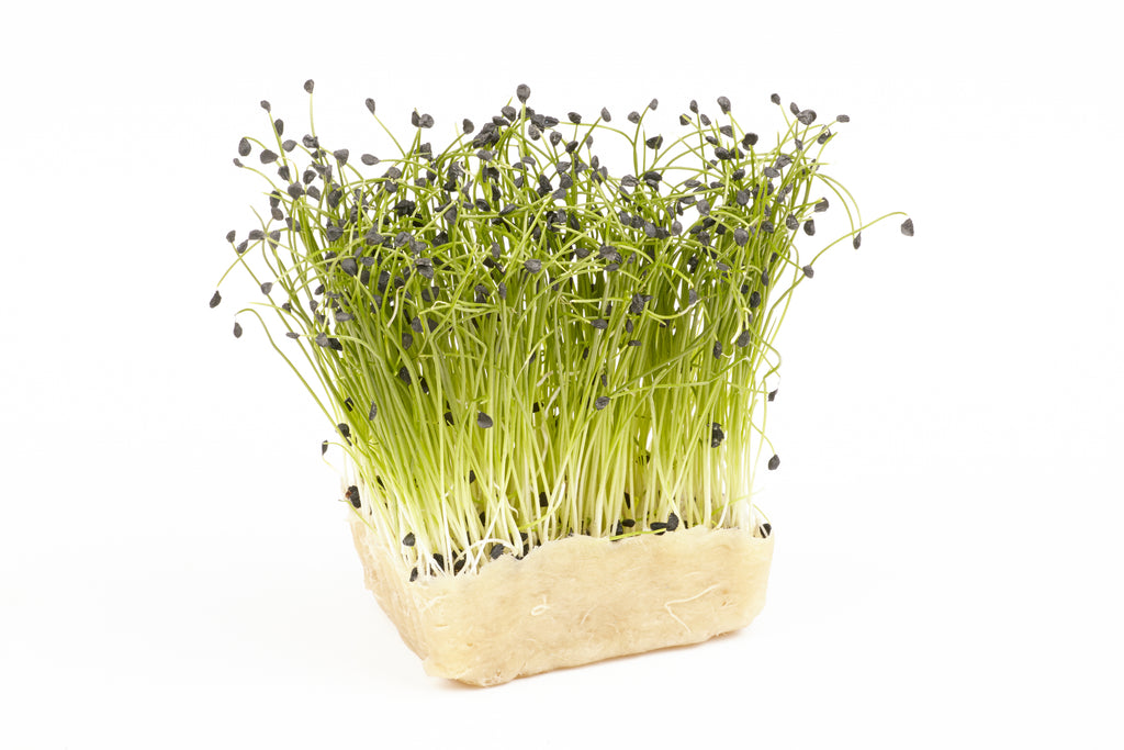 Garlic Chives Organic Microgreen Seeds