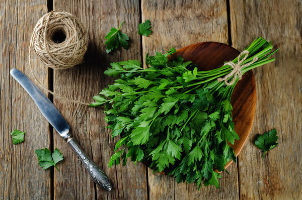 Parsley, Italian Flat-leaf