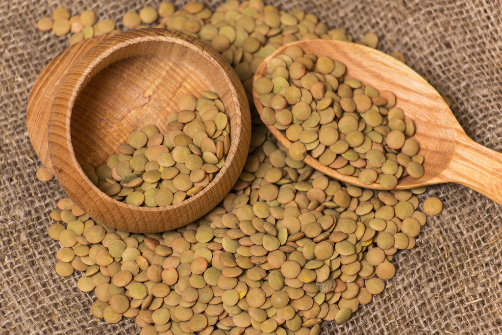 Green Lentil Organic Sprouting Seeds