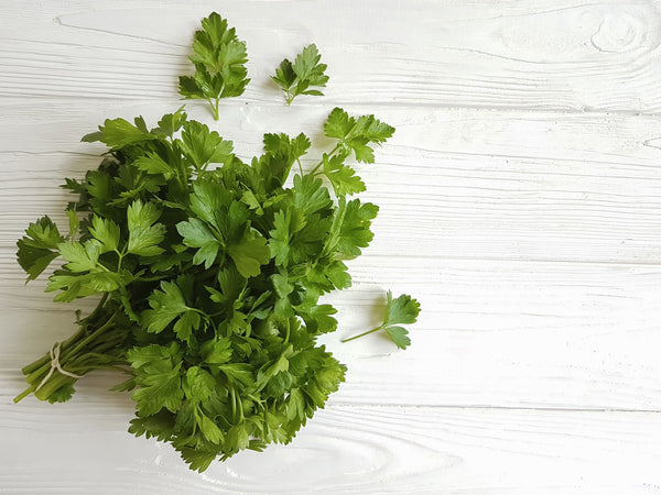 Italian Flat-leaf Parsley Seeds - Heirloom