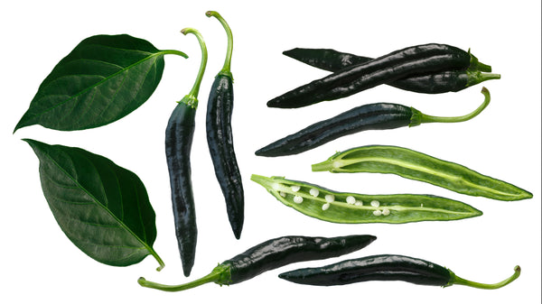 Pepper, Hot Holy Mole Hybrid