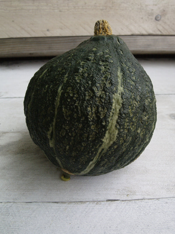 Winter Squash, Green Hubbard Seeds