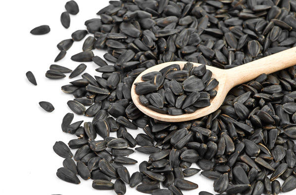 Black Oil Sunflower Organic Sprouting Seeds