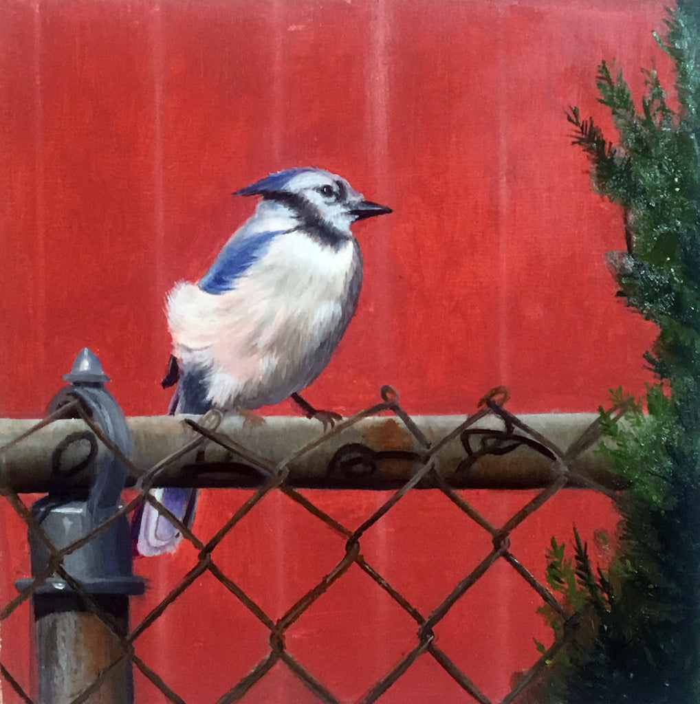 30-in-30, Day 5, Bluejay