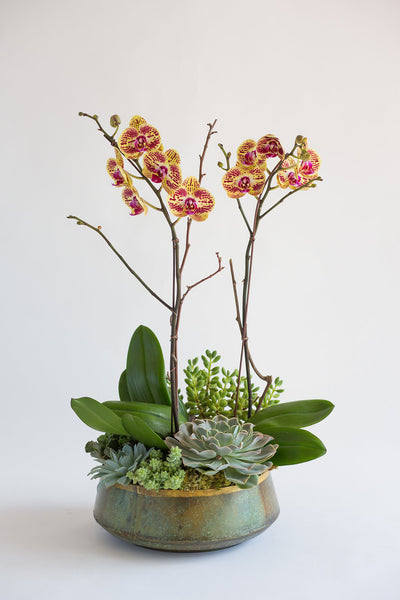Colorful & Chic Orchid Planter