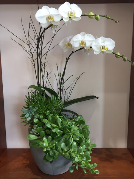 Elegant & Modern Orchid and Succulent Arrangement