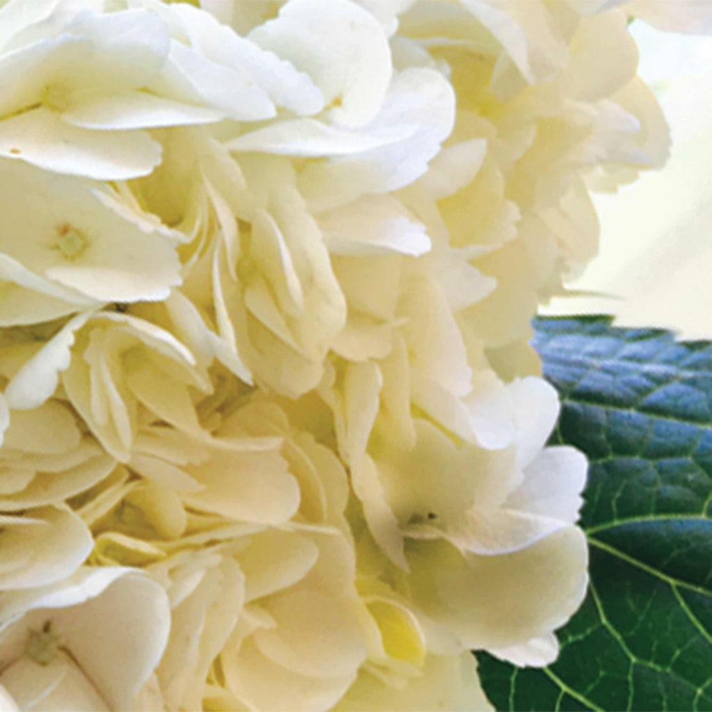 Hydrangea Scented Baxter Manor Candles