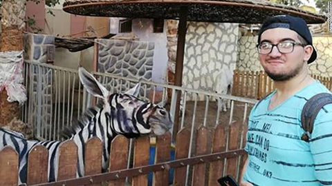 Urban Hydration article on zebra donkey Egypt