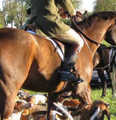 Fox Hunting 101 Blog Series Post 2: Horse Tack and Appointments