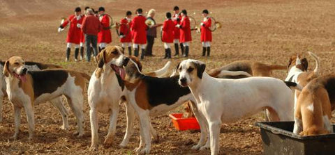 Fox Hounds | FoxHuntingShop.com