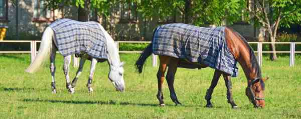 FoxHuntingShop Horse Blankets