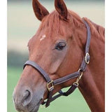 FoxHuntingShop.com-Keighley Soft Leather Halter