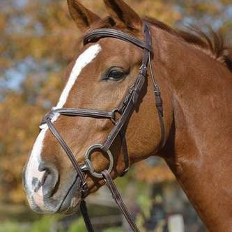 Crank Bridle with Flash