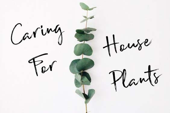 Caring For Your House Plants