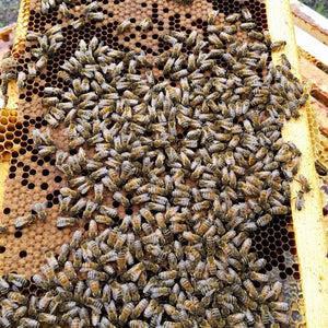 Still beekeeping after all