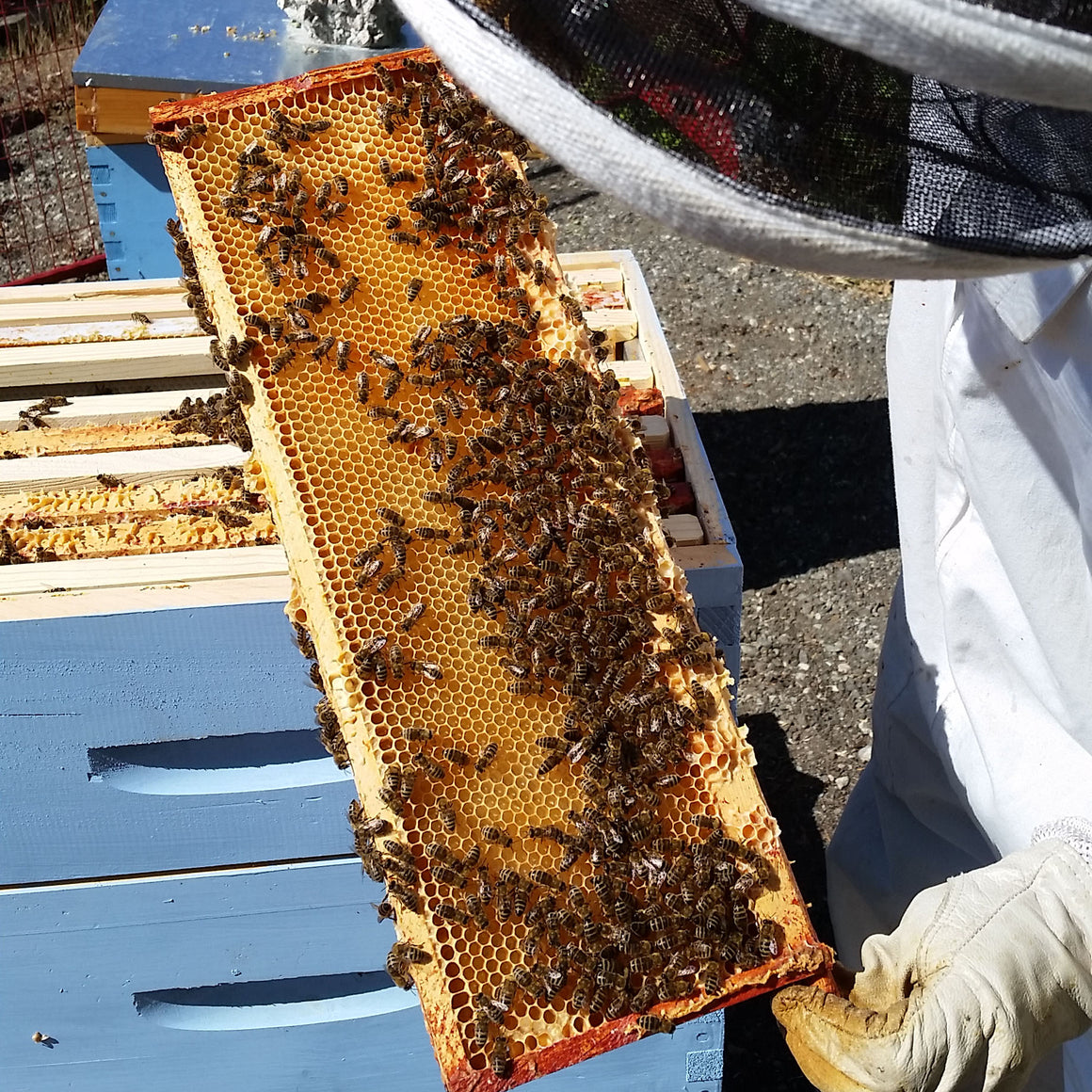 2018 Honey CSA (local pickup in vancouver only)