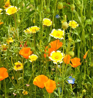 Bee Blend Wildflower seed pack w/pin