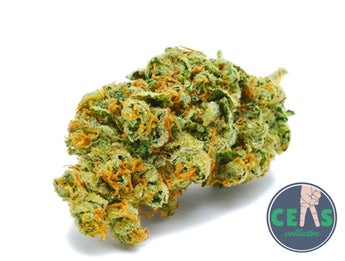 Honey Tree - Ceas Exotics