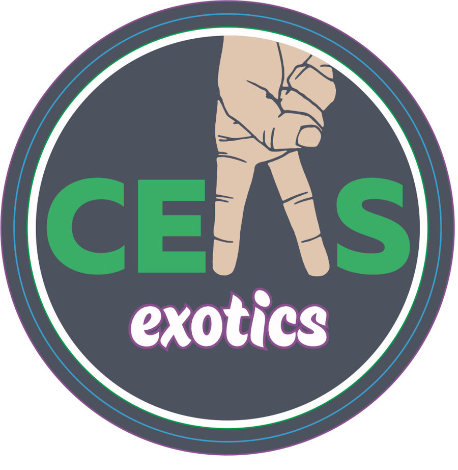 Glitter Can - CEAS Exotics