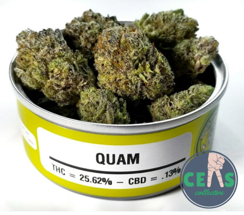 Quam - Space Money Meds